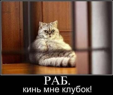 http://sh.uploads.ru/t/XfGwi.jpg