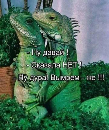 http://sh.uploads.ru/t/YmXxW.jpg