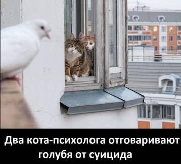 http://sh.uploads.ru/t/Zo1TO.jpg