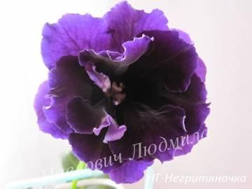 http://sh.uploads.ru/t/a4nBl.jpg