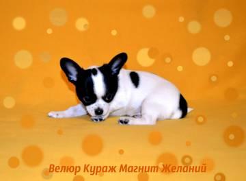 http://sh.uploads.ru/t/aobkA.jpg