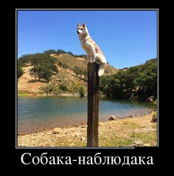 http://sh.uploads.ru/t/bA9tj.jpg