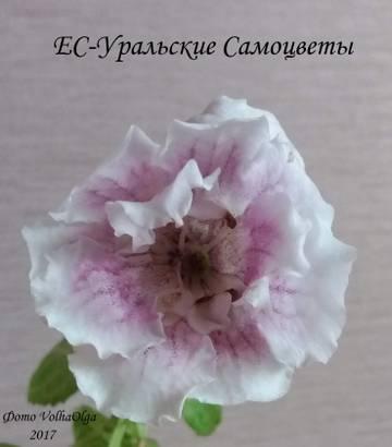 http://sh.uploads.ru/t/bQdCX.jpg