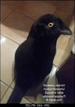http://sh.uploads.ru/t/bVaMP.jpg