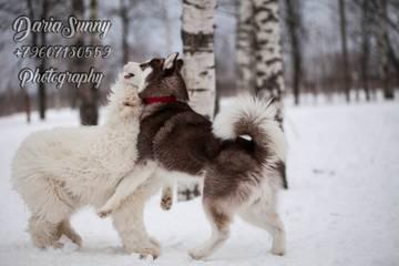 http://sh.uploads.ru/t/bpYkm.jpg