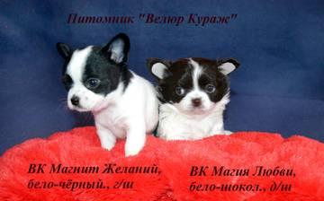 http://sh.uploads.ru/t/bqkSF.jpg