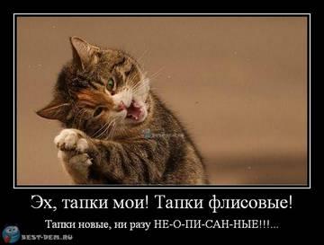 http://sh.uploads.ru/t/cKl9x.jpg