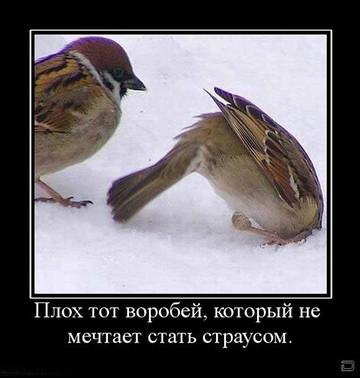 http://sh.uploads.ru/t/covC2.jpg