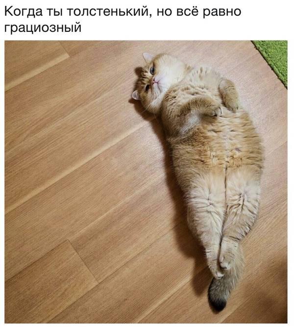 http://sh.uploads.ru/t/d3Z9a.jpg