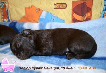 http://sh.uploads.ru/t/db9Iy.jpg