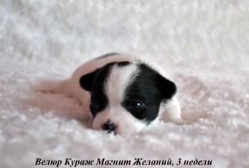 http://sh.uploads.ru/t/dm0IL.jpg