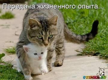 http://sh.uploads.ru/t/e6EpR.jpg