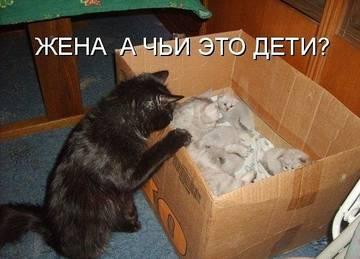 http://sh.uploads.ru/t/eKpbq.jpg