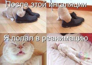 http://sh.uploads.ru/t/eSrgc.jpg