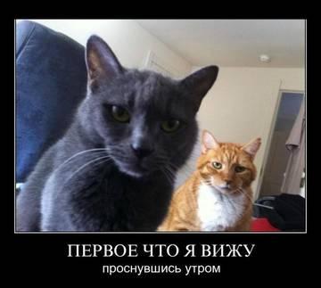 http://sh.uploads.ru/t/eqrsQ.jpg
