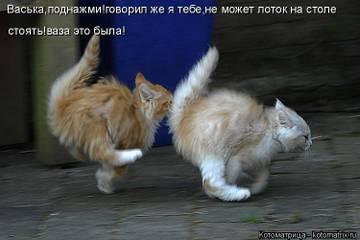 http://sh.uploads.ru/t/fD0jp.jpg