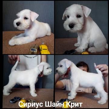 http://sh.uploads.ru/t/fiUGo.jpg