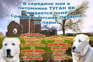 http://sh.uploads.ru/t/fmAeU.jpg