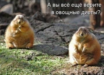 http://sh.uploads.ru/t/g5jX3.jpg