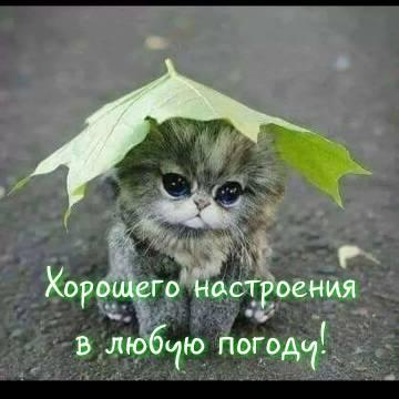 http://sh.uploads.ru/t/g65OQ.jpg
