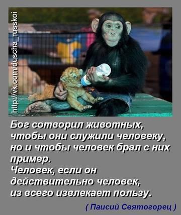 http://sh.uploads.ru/t/gGCYe.jpg