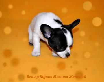 http://sh.uploads.ru/t/gWqJU.jpg