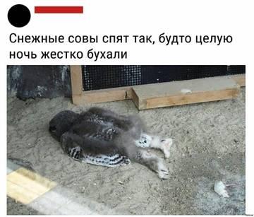 http://sh.uploads.ru/t/gX5Mu.jpg