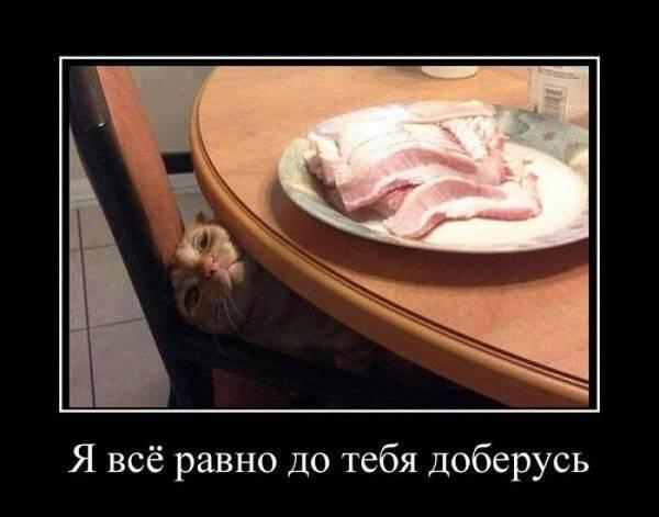 http://sh.uploads.ru/t/hSzy9.jpg