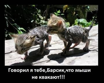 http://sh.uploads.ru/t/hekM9.jpg