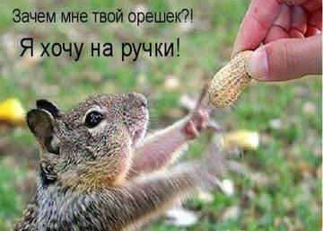 http://sh.uploads.ru/t/hfmsV.jpg