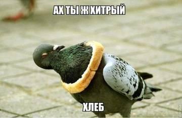 http://sh.uploads.ru/t/jFzY8.jpg