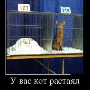 http://sh.uploads.ru/t/jKAvW.jpg