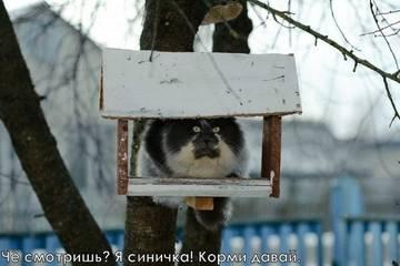 http://sh.uploads.ru/t/kErdn.jpg
