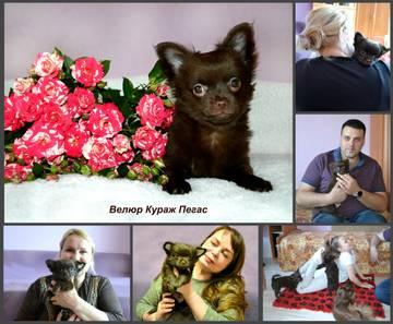 http://sh.uploads.ru/t/ktUfG.jpg