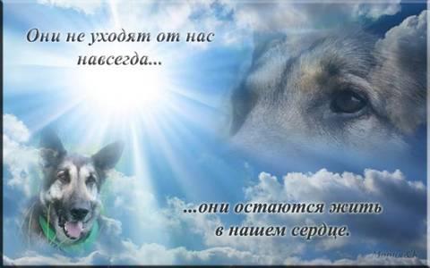http://sh.uploads.ru/t/liNq7.jpg