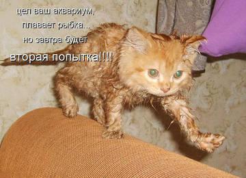 http://sh.uploads.ru/t/mXeR9.jpg