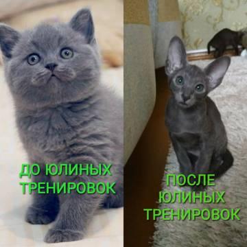 http://sh.uploads.ru/t/ntUBG.jpg