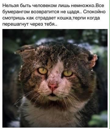 http://sh.uploads.ru/t/o7903.jpg