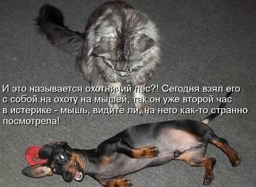http://sh.uploads.ru/t/oSaL2.jpg