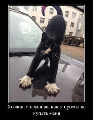 http://sh.uploads.ru/t/q9dt4.jpg