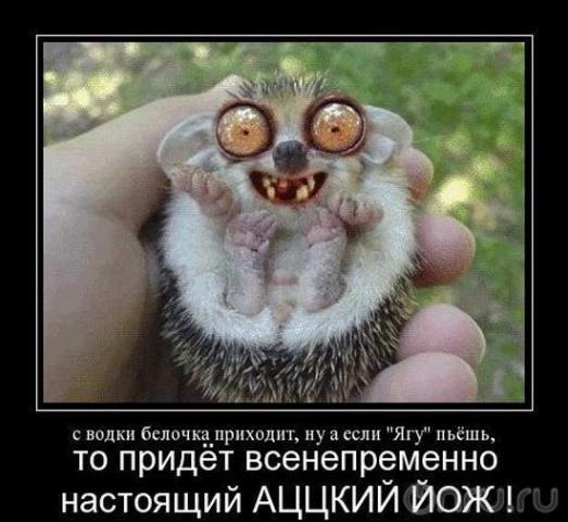 http://sh.uploads.ru/t/qbGYI.jpg