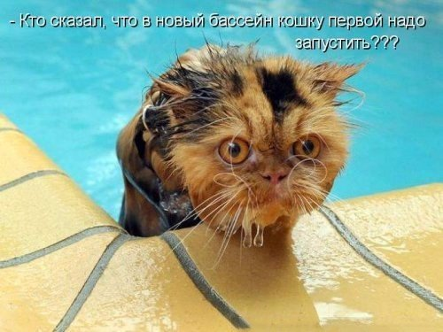 http://sh.uploads.ru/t/qbftA.jpg