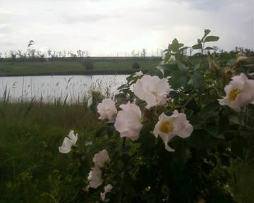 http://sh.uploads.ru/t/rexjV.jpg