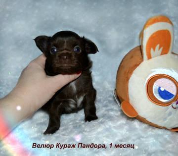 http://sh.uploads.ru/t/rotdE.jpg
