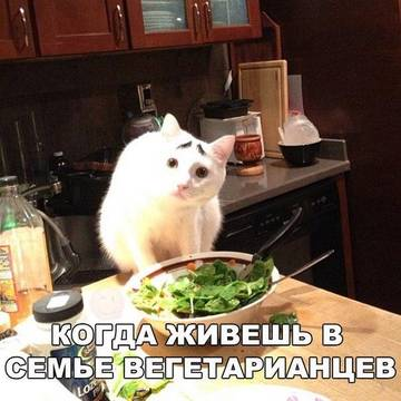 http://sh.uploads.ru/t/t6ZcS.jpg