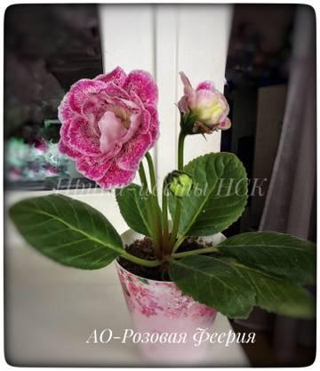 http://sh.uploads.ru/t/t6r4i.jpg