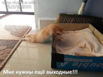 http://sh.uploads.ru/t/tG7PM.jpg