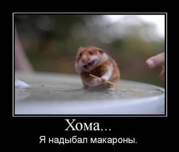 http://sh.uploads.ru/t/tHKmg.jpg