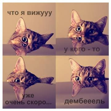http://sh.uploads.ru/t/td41o.jpg