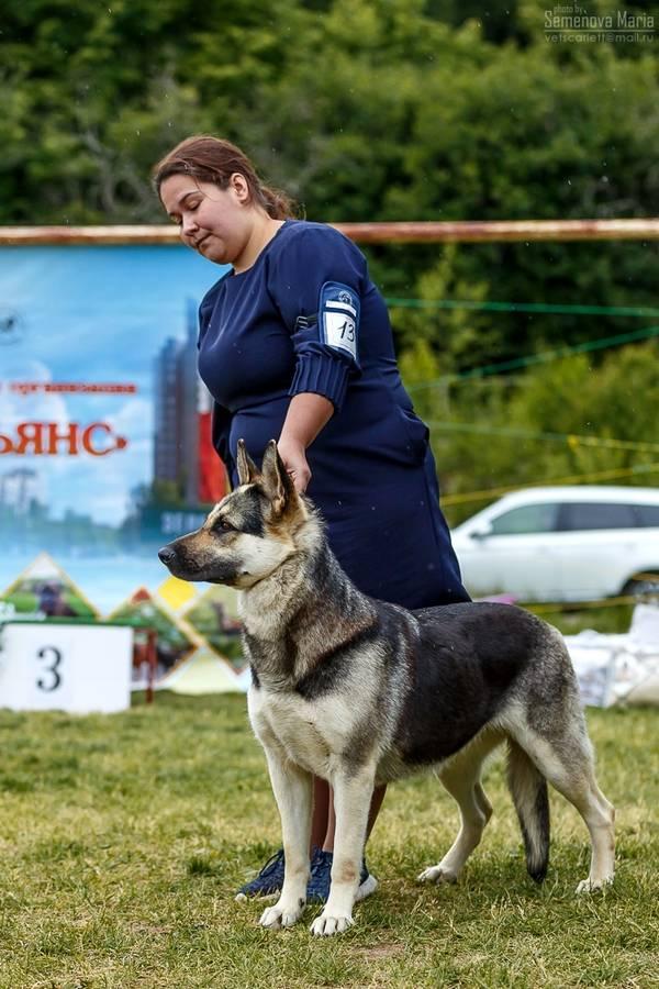 МОНО ВЕО КЧК+ 3 САС 10-11 июня г.Зеленоград TnVYi